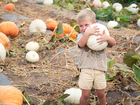 Little boy lifting white pumpkin on farm patch