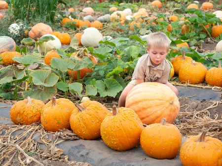 Little boy lifting big pumpkin on farm patch