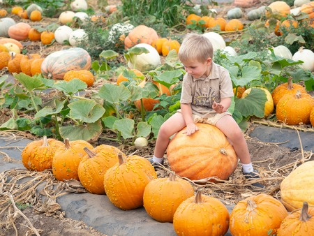 Little boy sitting on big pumpkin on farm patch 版權商用圖片 - 115343659