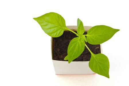 Young green plant on a white background Stock Photo - 8485755