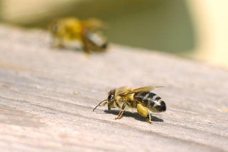 Macro of working bee near beehive Stock Photo - 8703587