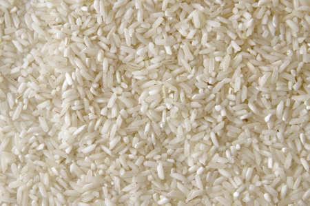 White rise texture photo