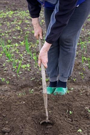 mattock: woman working in the garden Stock Photo