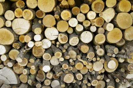 Stack of firewood  Stock Photo - 13548193
