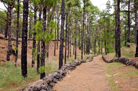 redish: Hiking path, Volcanoes route in La Palma island, Spain