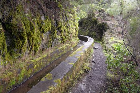 laurel mountain: Nacientes Marcos y Cordero - beautiful trail on the island La Palma, going along water duct in Los Tilos Nature Reserve, La Palma, Canary Islands, Spain