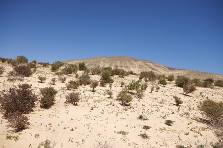 Sand dunes and mountains near Sotavento beach on Jandia peninsula, Fuerteventura, Canary Islands, Spain photo