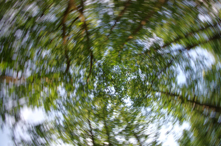 intentional: Motion blurred photographic background with trees and other vegetation against blue sky