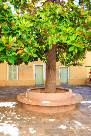 town square: Large Tree In Small Town Square
