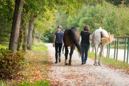 Friends With Their Horses