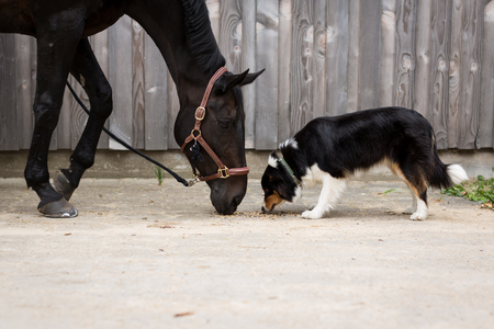 Horse and Dog in front of a ranch building