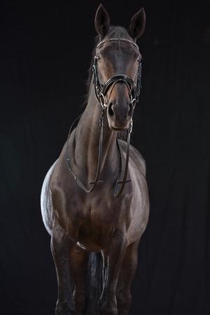 Horse On Black Background