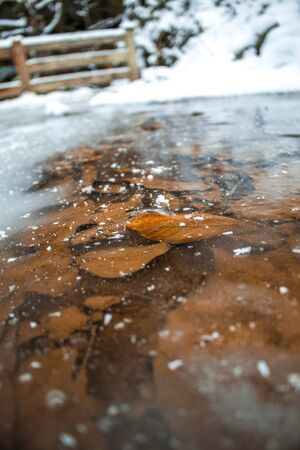 Frozen water with autumn leaves under snowy ice. Winter