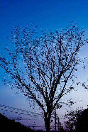 Tree on tree in bangkok Thailand