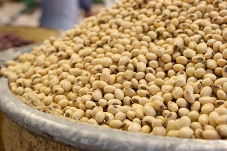 Thai soybean 1 Stock Photo