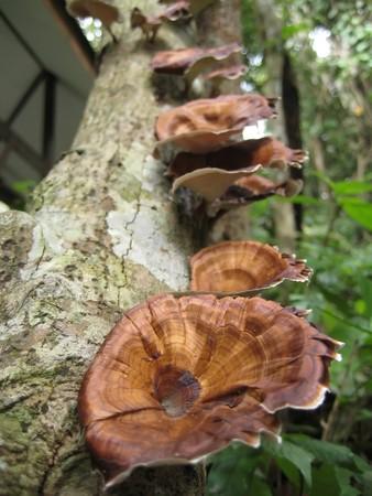 Mushroom on tree 2