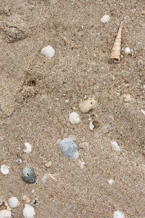 Sand and shell at cha-um beach