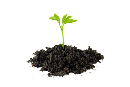 Plant on soil Stock Photo
