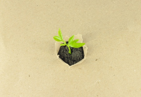 Plant on recycle paper top viwe