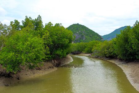 estuary: forest at the river estuary Stock Photo