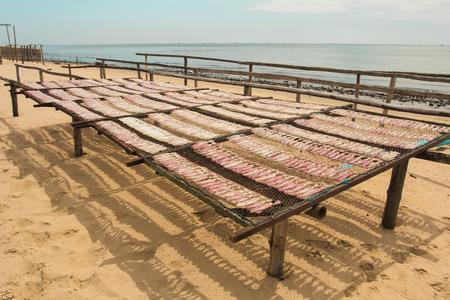 bask: Dry squid bask sun on beach Stock Photo