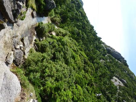 Scenery of Yaku Islands