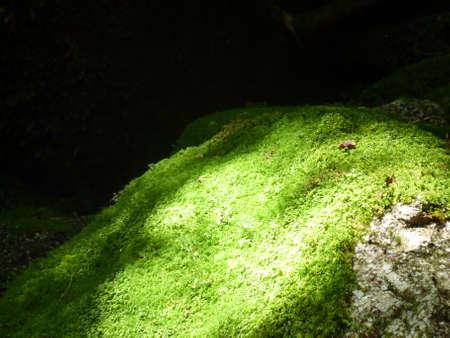 The nature of Yaku Islands  Stock Photo