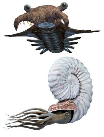 Anomalocaris and Ammonite set Stock Photo