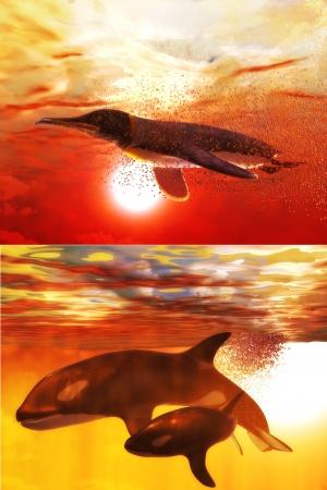 シャチ、ペンギンのセット