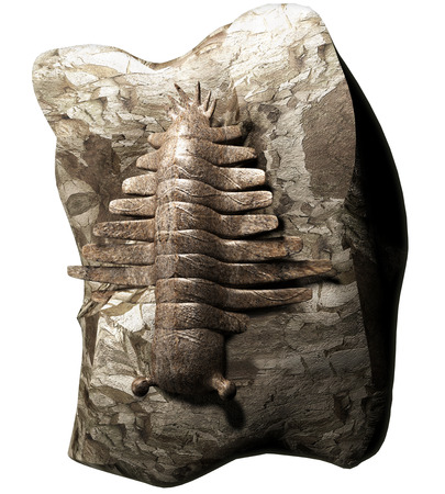paleontologist: Anomalocaris