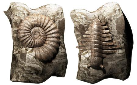 paleontologist: Fossil