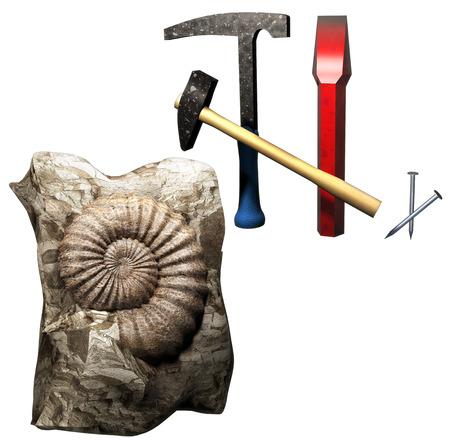 paleontologist: Fossil discovery