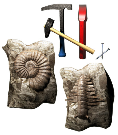 deletes: Fossil discovery