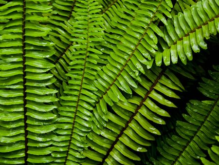 Fern background Stock Photo - 19385103