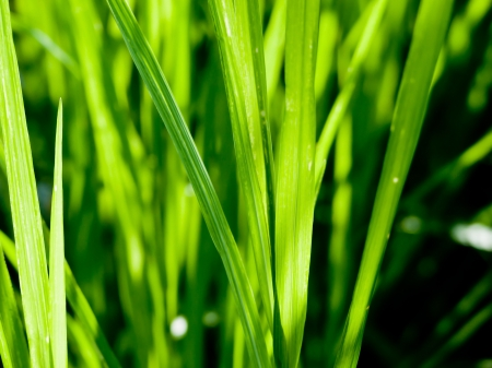 grass background Stock Photo - 20169958