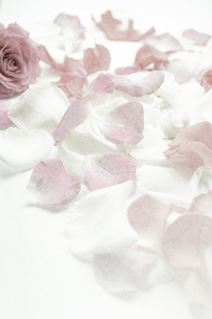 romantic couple: sweet color rose petals on mulberry paper texture for romantic background