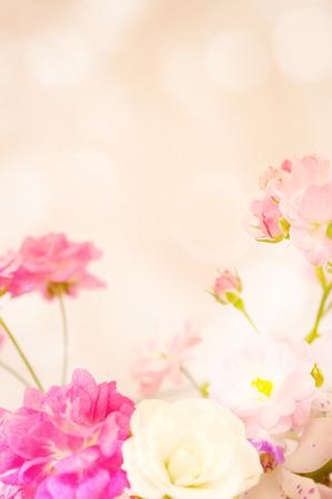 flor morada: rosas de colores dulces en color suave y el estilo de desenfoque Foto de archivo