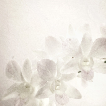 sweet orchids on mulberry paper texture for background Stock Photo