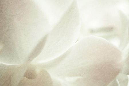 beige backgrounds: sweet orchids on mulberry paper texture for background Stock Photo