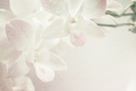 sweet orchids on mulberry paper texture for background 스톡 콘텐츠
