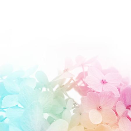 kleurrijke bloemen achtergrond, verse zomer in zachte stijl Stockfoto