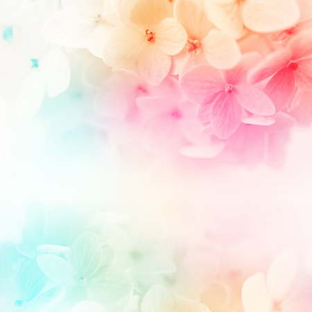 vivid: colorful flowers background, fresh summer in soft style