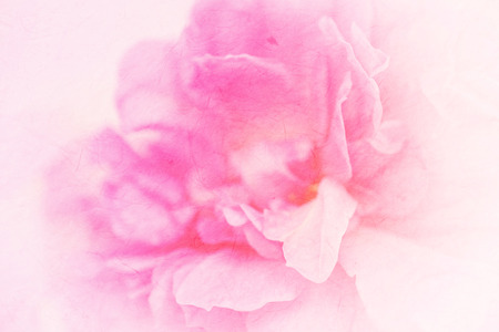 vivid color rose in soft color style on mulberry paper texture for background Stock Photo