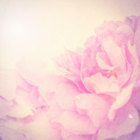 colores pastel: las flores del color de la vendimia en el estilo de color suave en la textura de papel de morera para el fondo Foto de archivo