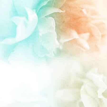 flor morada: dulce flor de rosas de color en el estilo suave y la falta de definici�n en la textura de papel de morera