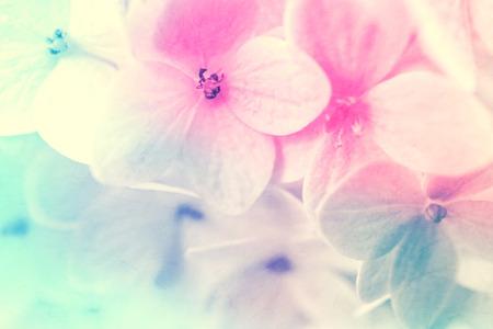 color in: flores de colores dulces de estilo suave y la falta de definición en la textura de papel de morera para el fondo