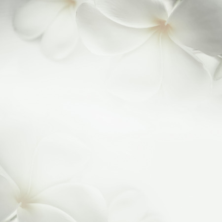 frangipani plumeria and sweet flowers in soft color and blur style for background