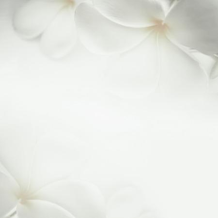 romantico: plumeria frangipani y flores dulces en color suave y el estilo de desenfoque para el fondo