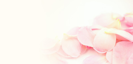 sweet color petal rose for romantic background