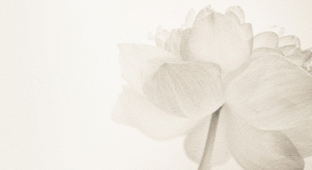 sweet color lotus in soft color and blur style on mulberry paper texture